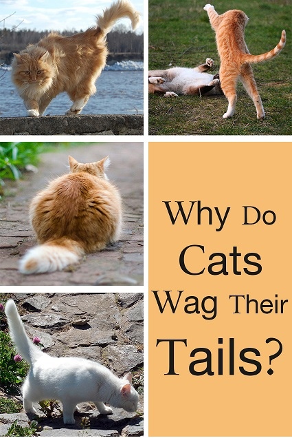 what does wag mean